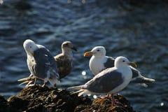 四只海鸥 免版税库存照片