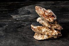 四只美丽的接近的牡蛎特写镜头在黑背景的 可口热带海软体动物 最伟大的纤巧 复制空间 库存图片