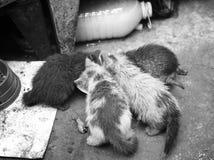 四只饥饿的小猫 免版税库存图片