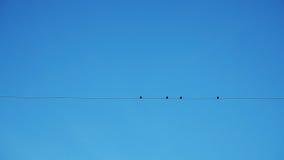 四只鸟剪影  库存图片
