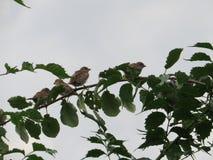 四只鸟坐分支 图库摄影
