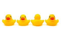 四只鸭子rubbe 免版税图库摄影