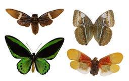 四只trpical被隔绝的蝴蝶 免版税库存照片