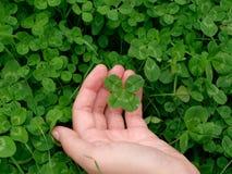 四叶三叶草在手中 免版税库存图片