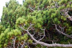 四季不断的山灌木 图库摄影