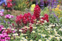 四季不断的庭院花床在春天 库存图片