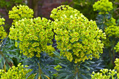 四季不断的植物在庭院里 库存图片