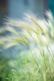 四季不断的草 库存照片