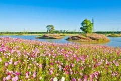 四季不断的金鸡菊和树 免版税库存照片