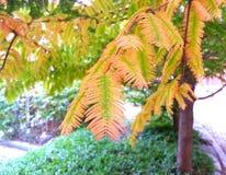 四季不断的结构树 免版税库存图片