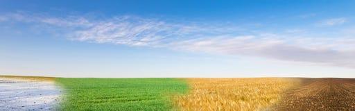 四季领域全景拼贴画在蓝天下 免版税库存照片
