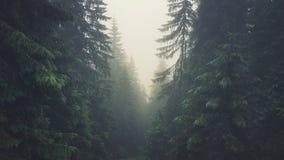 四山的有雾的森林 免版税库存图片