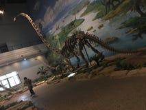 四川中国的恐龙骨 免版税库存图片