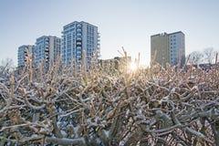 四座高层建筑物和低冬天太阳 免版税图库摄影