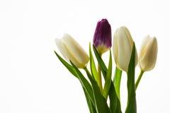 四新鲜的郁金香花束在白色背景的 免版税库存图片