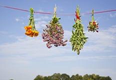 四朵在串的医疗草本花束 图库摄影