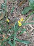 四朵小菊花开花, 免版税库存图片