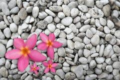 四朵桃红色花 免版税库存照片