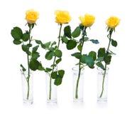 四朵玫瑰黄色 免版税库存照片