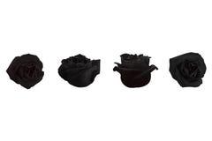 四朵黑玫瑰 免版税库存照片