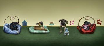 四条小的小狗在背景中。 图库摄影