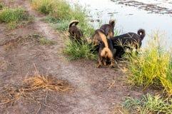 四条狗发现了某事地下 库存图片