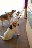四条狗等待ar的街道走 库存照片