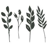 : 四根不同小树枝 向量例证