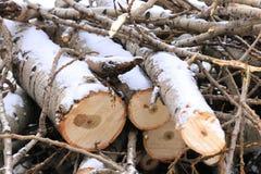 四根被锯的日志和枝杈在雪 免版税库存照片