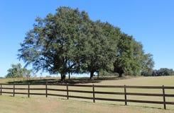 四棵农厂树 库存照片