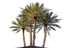 四棵棕榈树 免版税库存图片