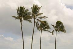 四棵棕榈树 免版税图库摄影
