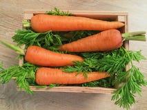 四棵红萝卜在有绿色的一个箱子在沙拉的 图库摄影