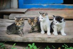 四滑稽的小猫 免版税库存图片
