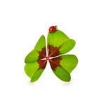 四片叶子三叶草和瓢虫在白色背景 免版税图库摄影