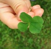 四片叶子三叶草在孩子的手上 免版税图库摄影