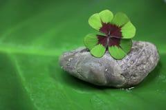 四片叶子三叶草-自然绿色背景 免版税库存图片