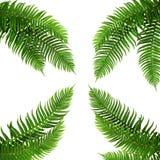 四片绿色叶子 免版税库存照片