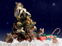 四老鼠在背景满天星斗的天空的夜之前装饰圣诞树 免版税库存图片