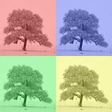 四色树 自然的颜色 免版税图库摄影