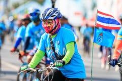 四色菊, THAILAND-AUGUST 16-2015 :这个事件是 库存图片