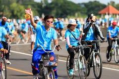 四色菊, THAILAND-AUGUST 16-2015 :这个事件是 免版税库存图片