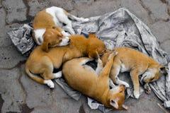 四被抛弃的狗兄弟姐妹 图库摄影
