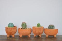 四仙人掌和多汁植物在泥罐 免版税库存图片