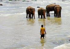 四头河大象 库存照片
