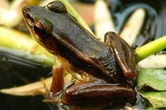 回到棕色青蛙池塘视图 免版税库存照片