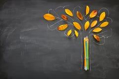 回到概念学校 铅笔顶视图横幅在树剪影旁边的与在教室黑板背景的秋天干燥叶子 库存图片