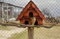 回到鸟蓝色颜色停止的房子红色美国白色庭院 库存照片