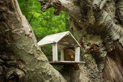 回到鸟蓝色颜色停止的房子红色美国白色庭院 库存图片