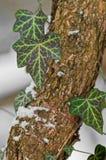 回到绿色叶子光被采取的结构树 图库摄影